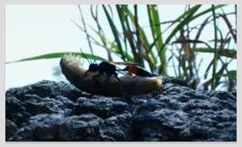 나나니벌과 왜코벌의 모성애