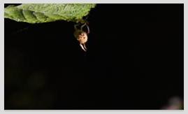 촬영이 어려웠던 곤충들