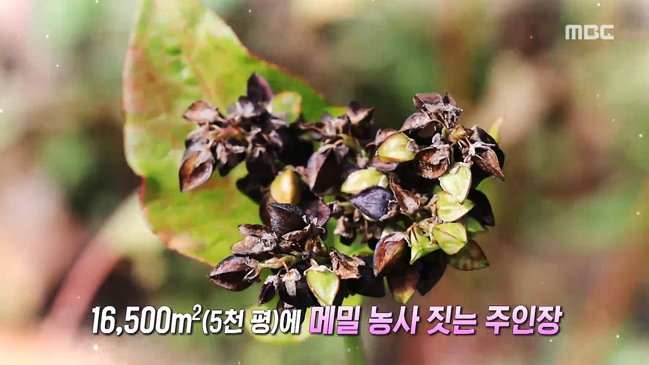 [생방송 오늘 저녁] 710회