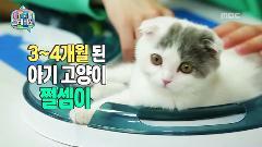 마이 리틀 텔레비전 99회