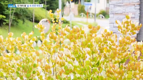 [생방송 오늘 저녁]650회