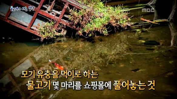 신비한 TV 서프라이즈836회