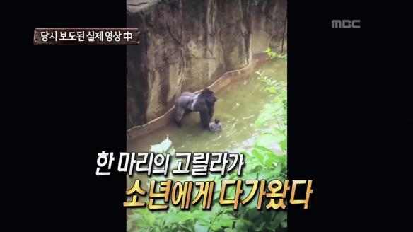 신비한 TV 서프라이즈831회