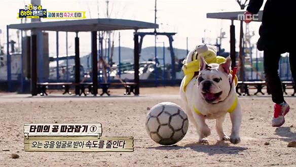 축구 천재犬 '타미'의 환상적인 드리블! [6회]