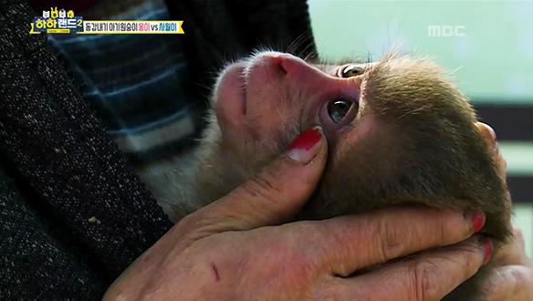 놀이=의사소통, 놀지 못해 무리와 어울리지 못하는 아기 원숭이 '몽이' [6회]