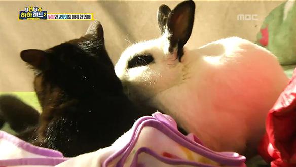 토끼와 고양이의 종족을 넘어선 사랑..♡