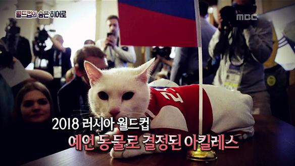 러시아 월드컵 공식 예언 동물 '아킬레스'