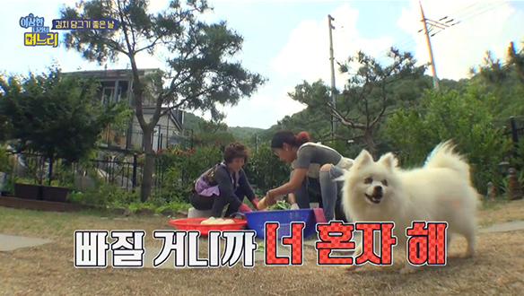 김치 담그기 좋은 날, 마리의 수난시대