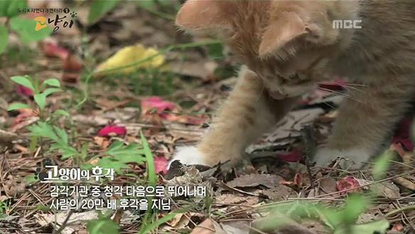 아기 맹수 새끼 고양이의 용맹한 사냥 법