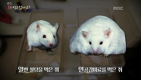 인공 감미료를 섭취한 동물이 더욱 뚱뚱하다?!