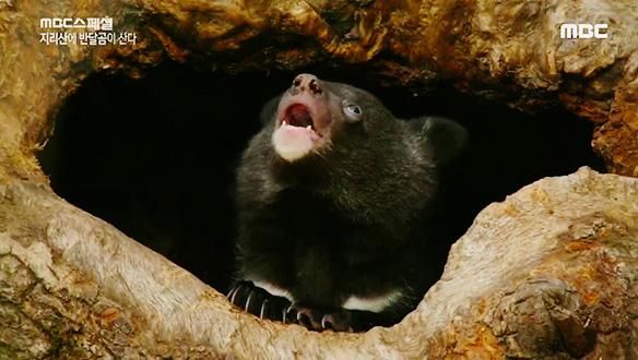앞발을 잃은 엄마 올무 곰의 기적, 아기곰아 안녕?