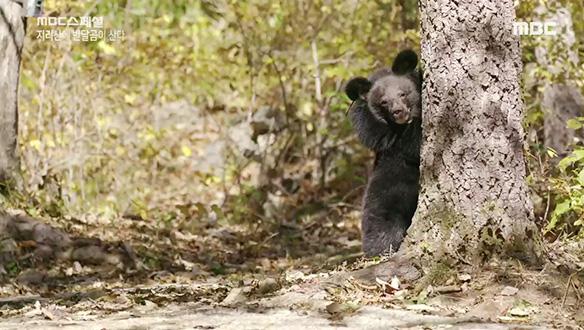 어린 곰의 낯선 땅, 지리산 정착기 (ft. 꼬물꼬물)