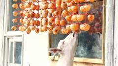 [[생방송 오늘 저녁]]1.산골 부부의 사랑 가득 동물 농장  2.이색 코스 요리 대결! 복요리 풀코스15,000원 vs 돼지고기 샤부샤부 코스  3.한 달 5천! 형제 생선가게  4.낭만가득! 산 사나이의 산중일기