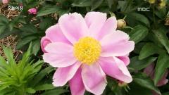 [[생방송 오늘 아침]]1.폭우에 침수된 마을, 평창올림픽 때문에?  2. 보기 좋은 꽃이 몸에 더 좋다?! 5월의 꽃 '작약  3. 흰옷, 매일 새 옷처럼 입는 비법이 있다?!  4. 꿈을 현실로 만드는 사람들  5.휴먼다큐 사랑 '당신은 나의 금메달'