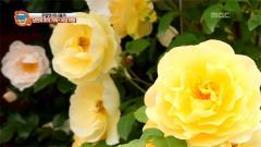 [MBC 파워매거진]1.5월의 여왕 곡성에 납시오!  2.공부가 제일 쉬웠다는 부부, 하지만 집안정리는?  3.가성비 대박~ 초저가 맛 집  4.좌충우돌~ 가족의 탄생