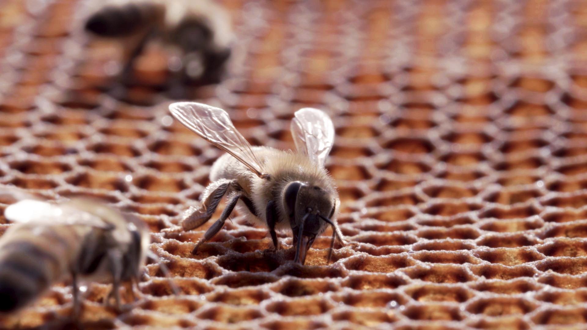 기후의 반격 1부 - 꿀벌