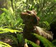 한반도의 뿔공룡<br> 코리아케라톱스