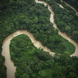 아마존의 눈물