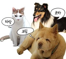반려동물 소개